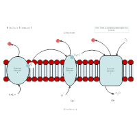 Biology diagram examples electron transport biology diagram ccuart Gallery