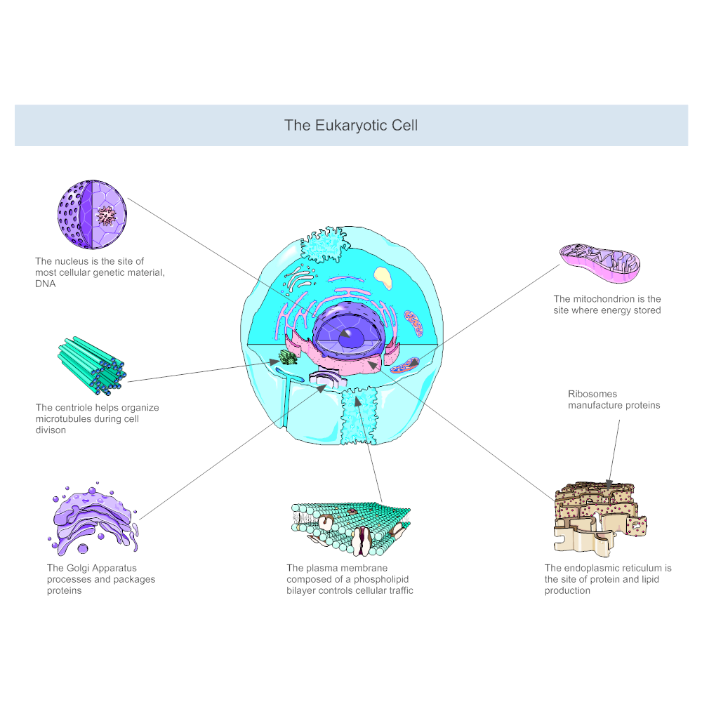 Eukaryotic cell diagram ccuart Gallery