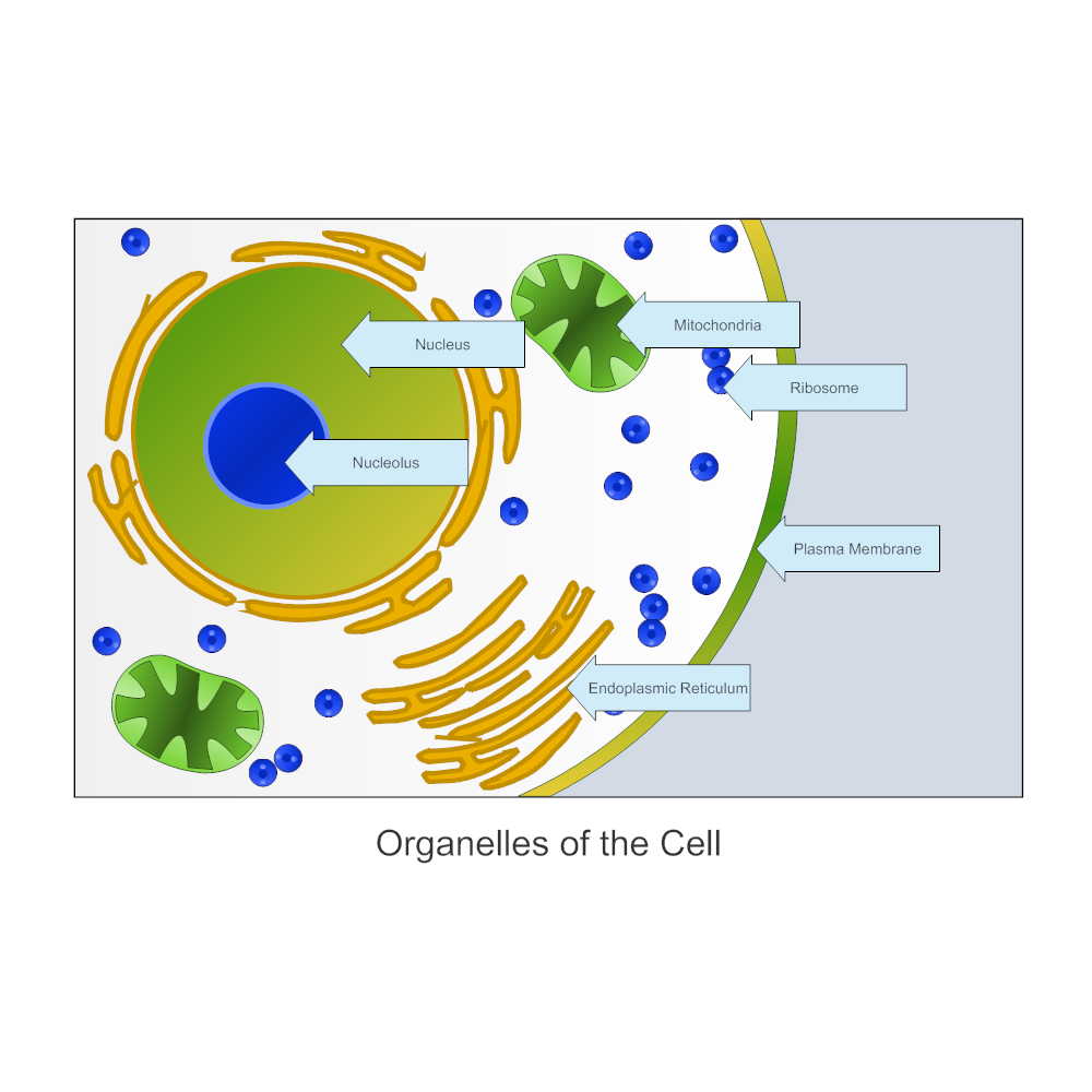 Example Image: Organelles of a Cell - Biology Diagram