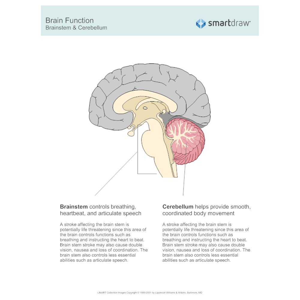 brain function - brainstem & cerebellum, Cephalic vein
