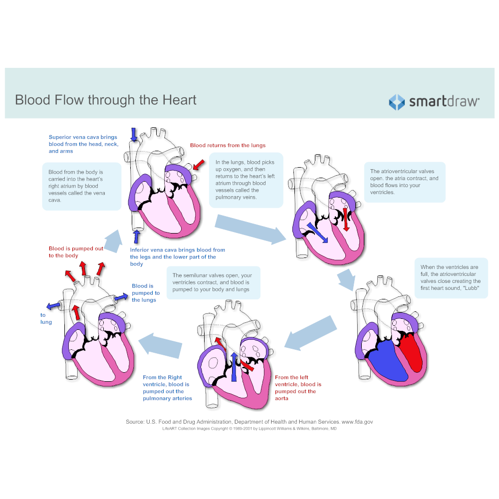 Blood flow through the heart click to edit this example example image blood flow through the heart ccuart Choice Image