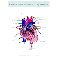 Diagram of circulatory sys search for wiring diagrams circulatory system diagram cardiovascular system and blood rh smartdraw com diagram of circulatory system of man ccuart