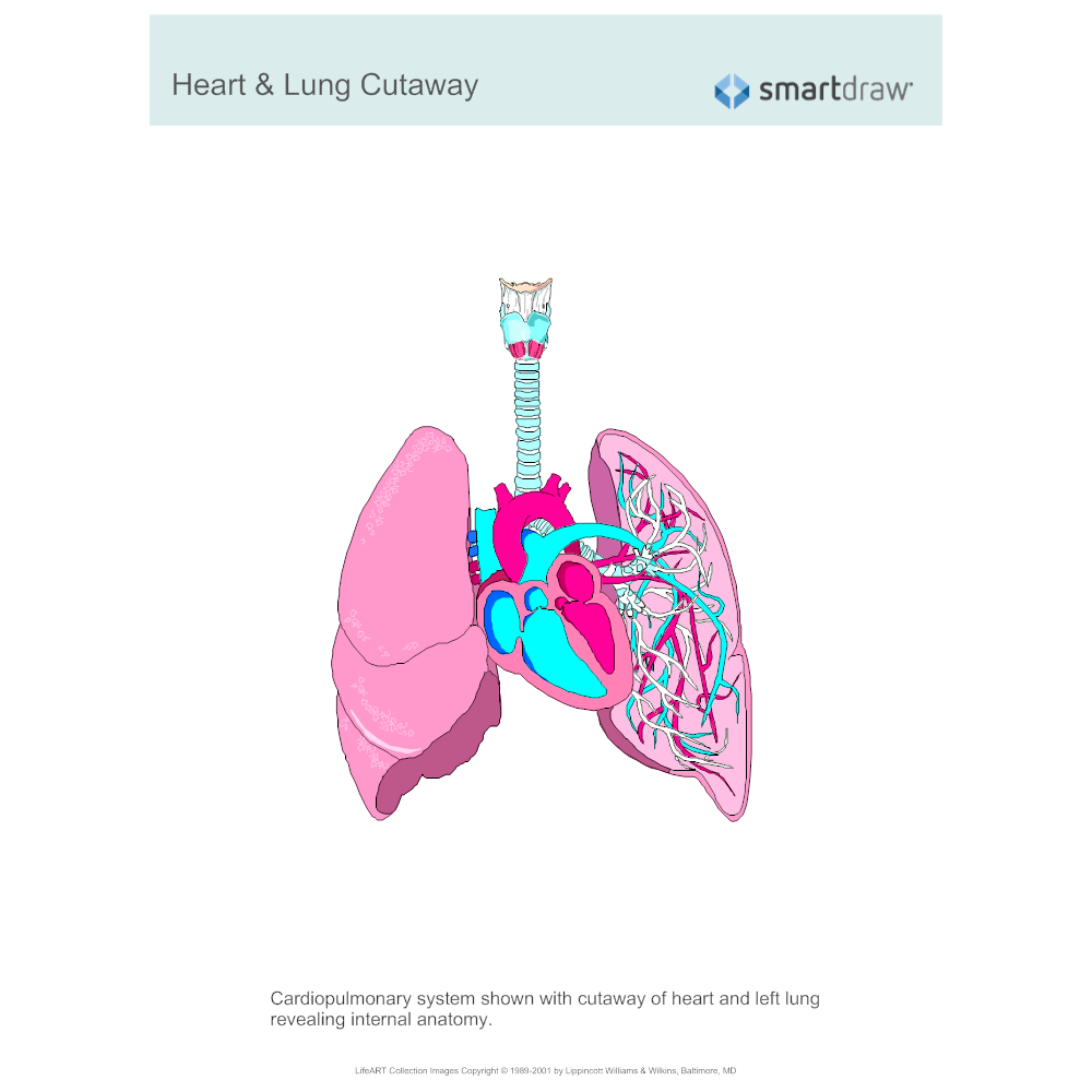 Example Image: Heart & Lung Cutaway