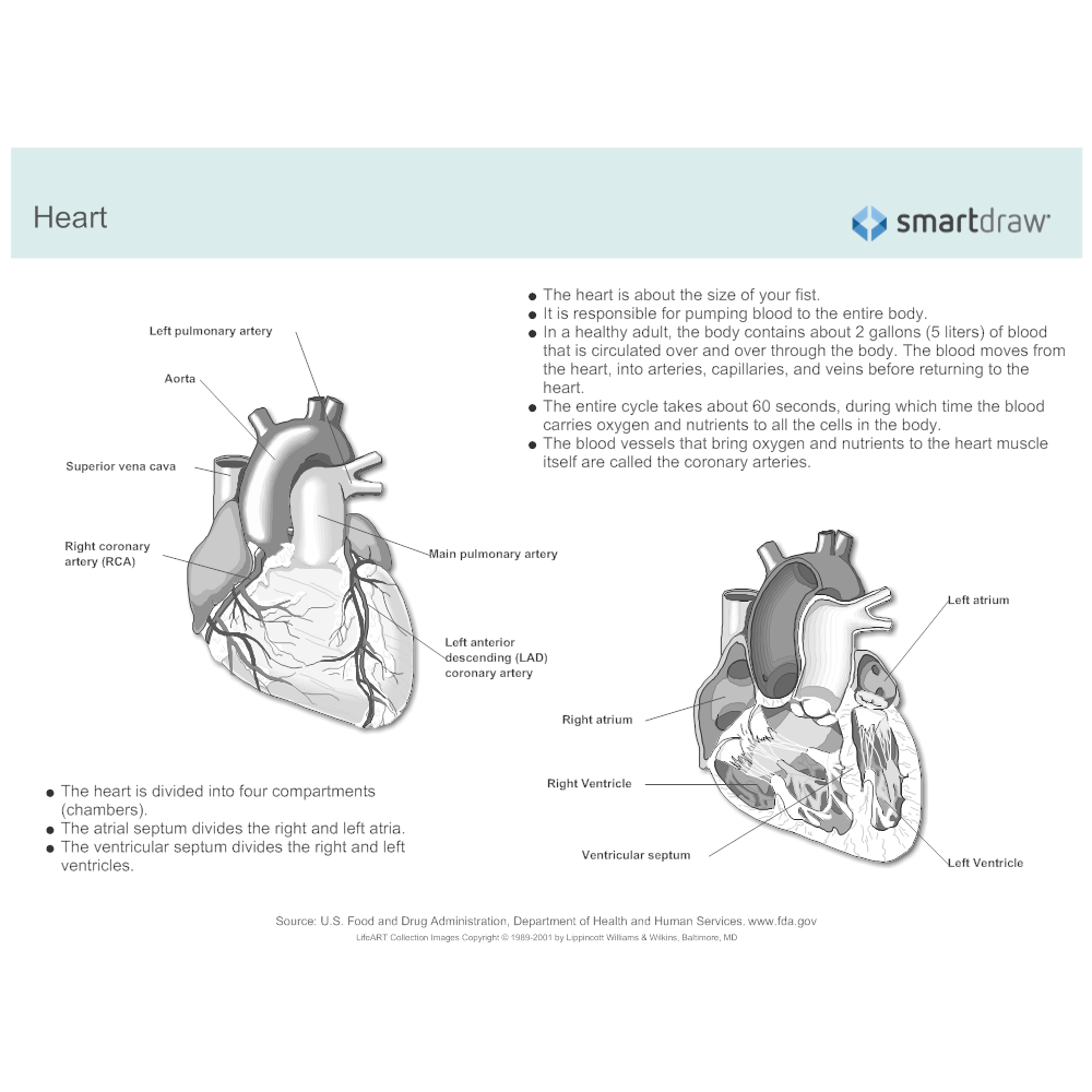 Example Image: Heart