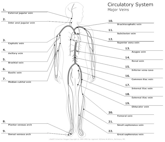 Circulatory System Diagram Types of Circulatory System