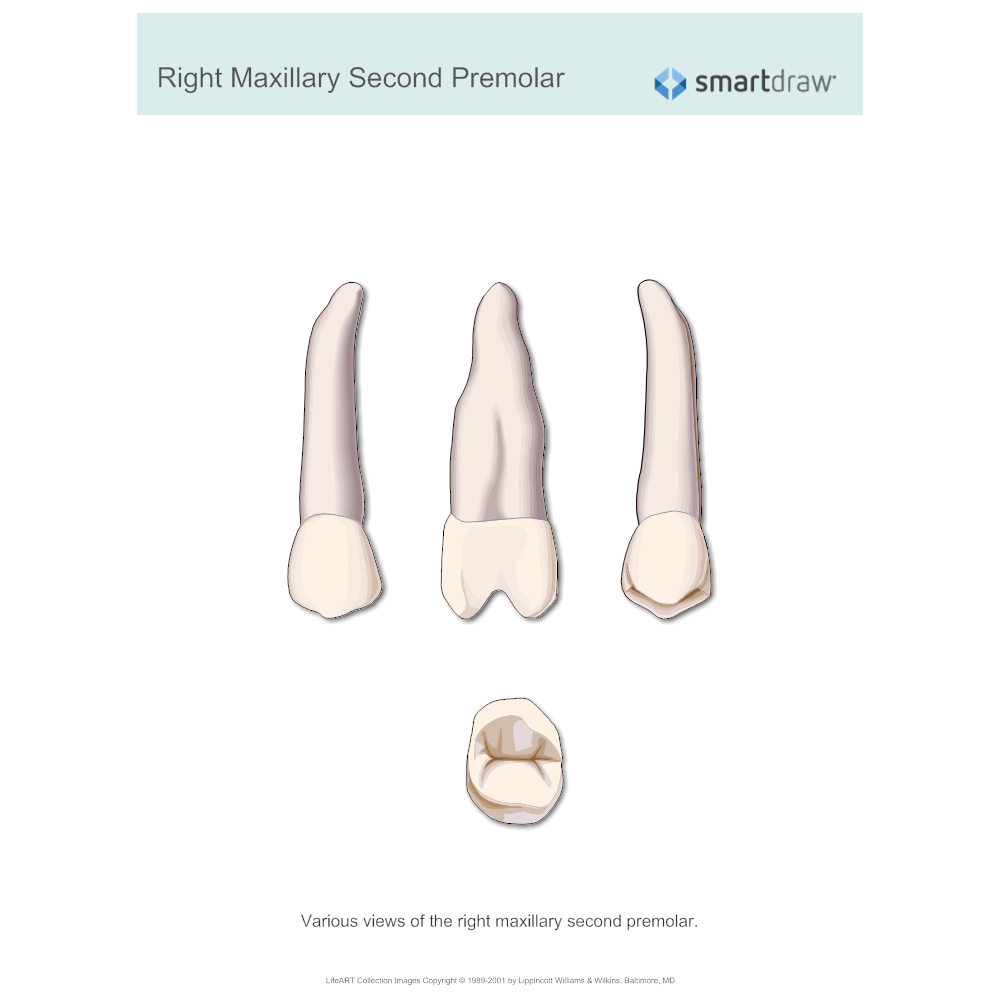 Example Image: Right Maxillary Second Premolar