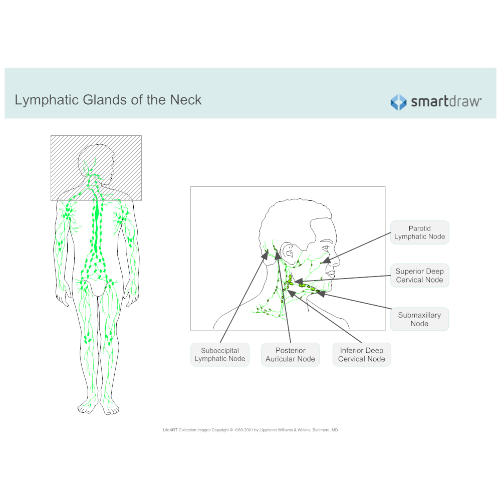 Lymphatic system diagram ccuart Images