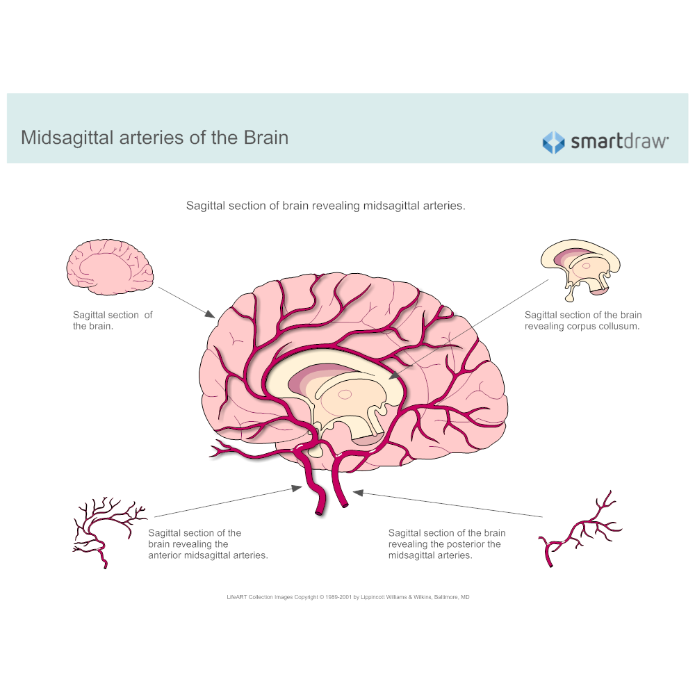 midsagittal-arteries-of-the-brain.png?bn=1510011130