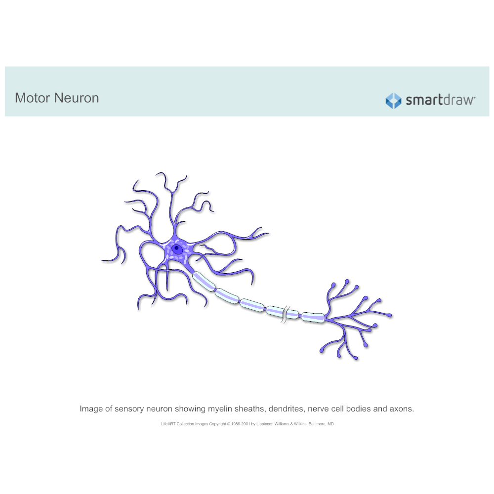 Motor neurongbn1510011130 example image motor neuron ccuart Image collections