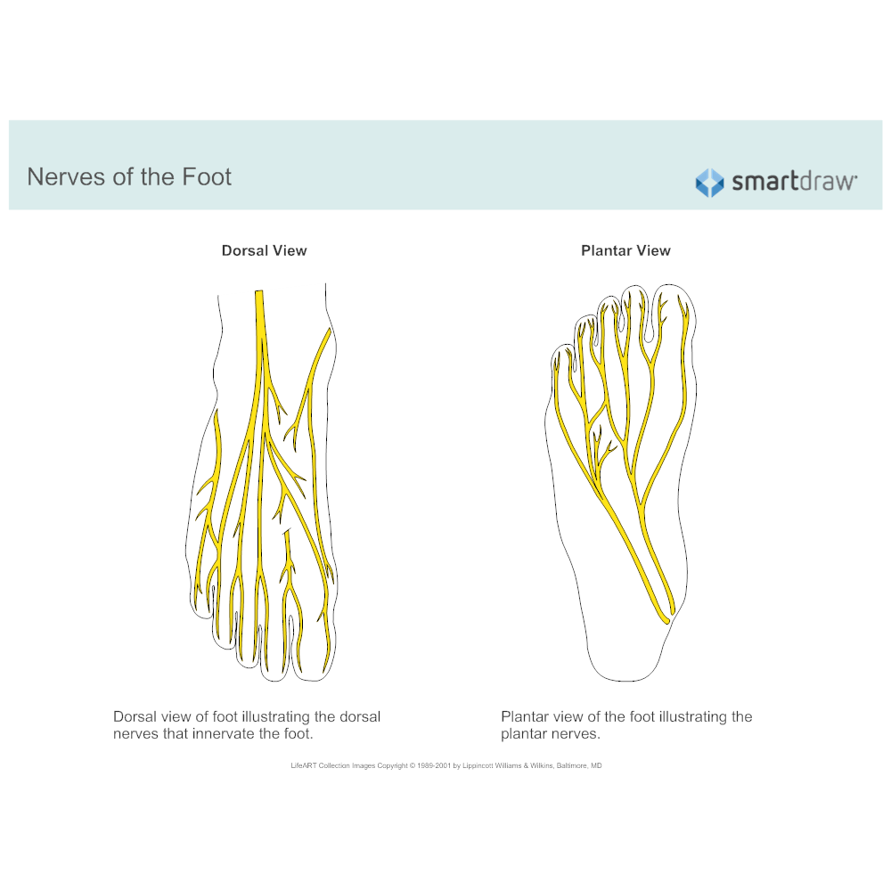 Example Image: Nerves of the Foot