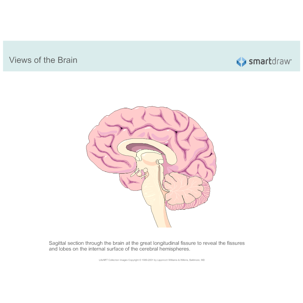 Example Image: The Brain - Sagittal Section