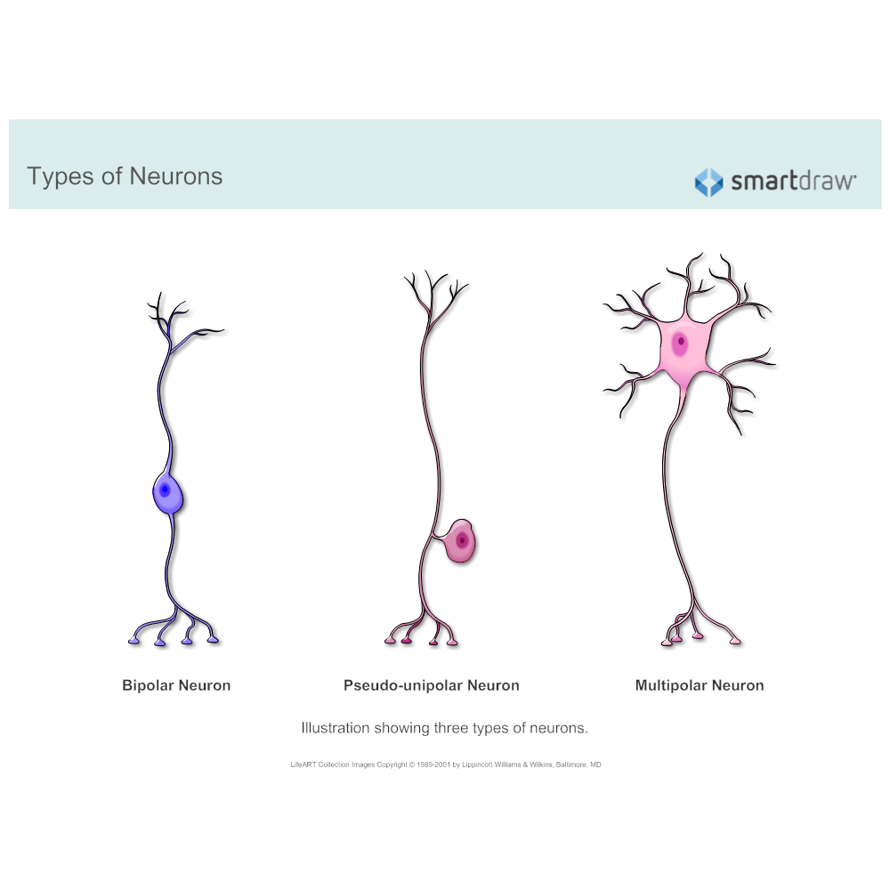types-of-neurons.png?bn=1510011080