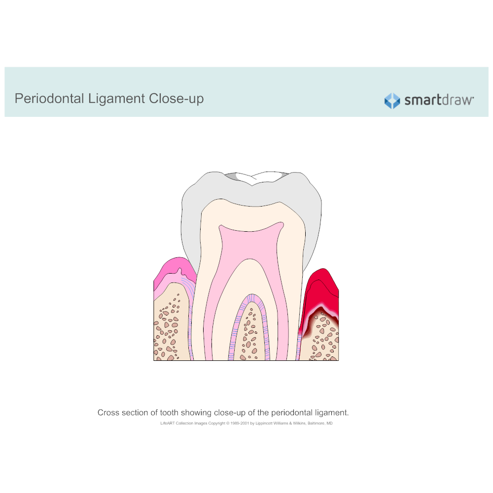 Example Image: Periodontal Ligament Closeup