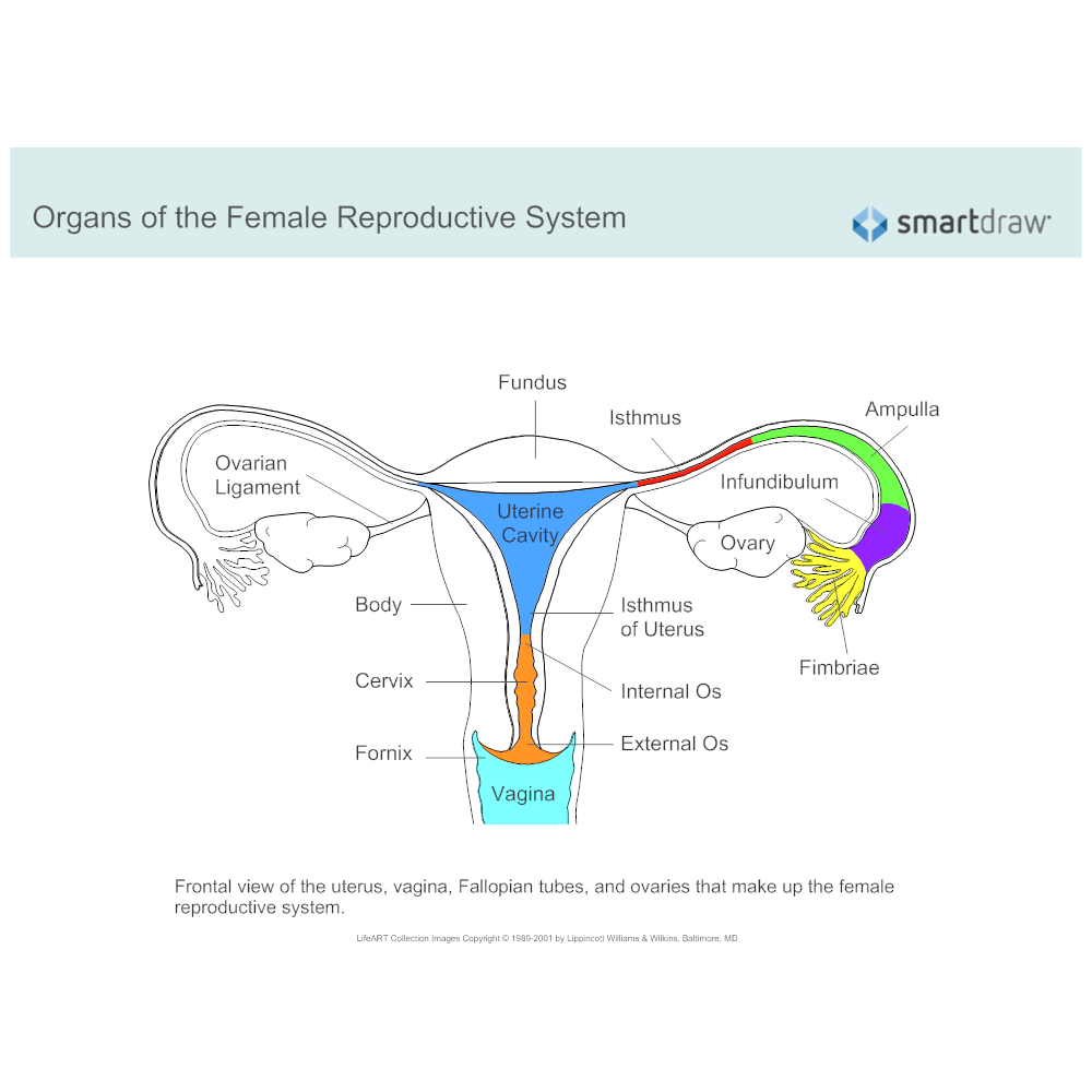 Example Image: Female Reproductive System Diagram