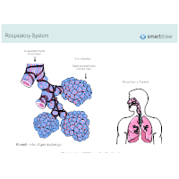 Respiratory System Diagrams