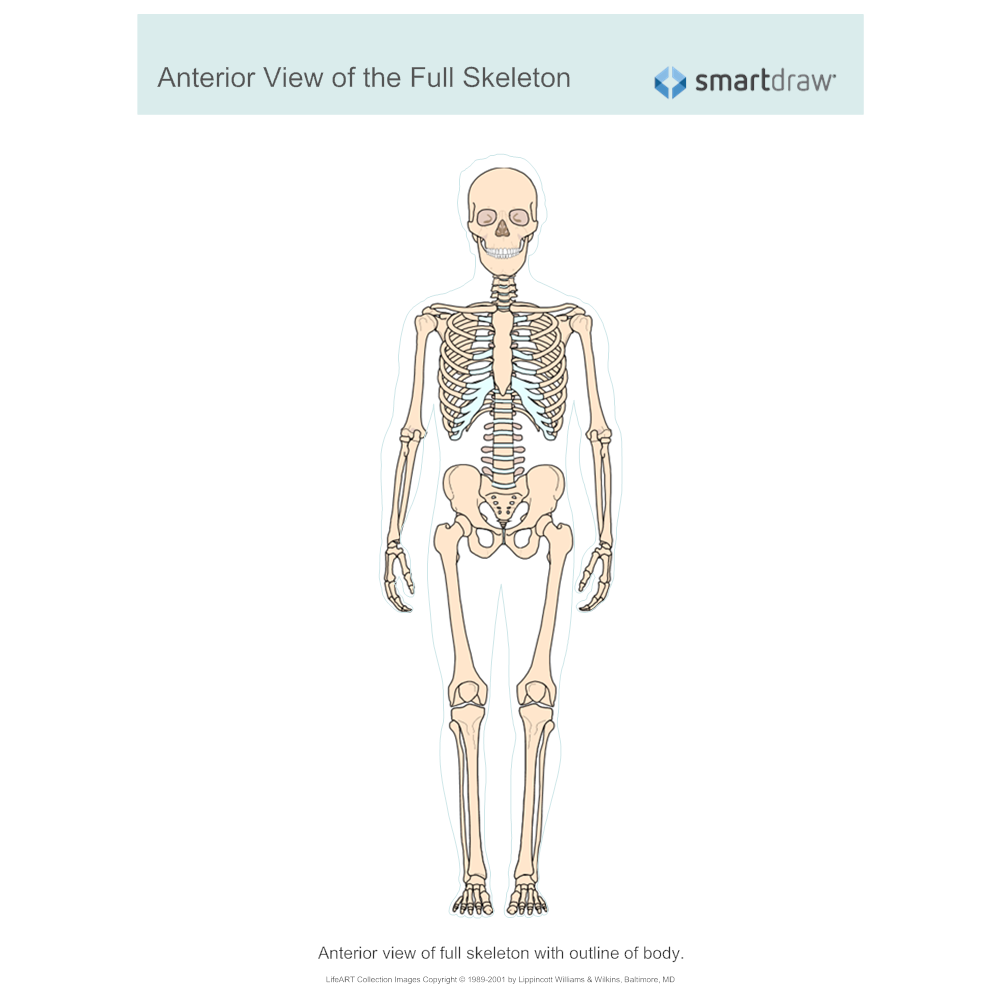 Example Image: View of the Full Skeleton - Anterior