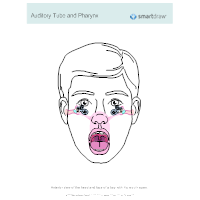 Auditory Tube and Pharynx